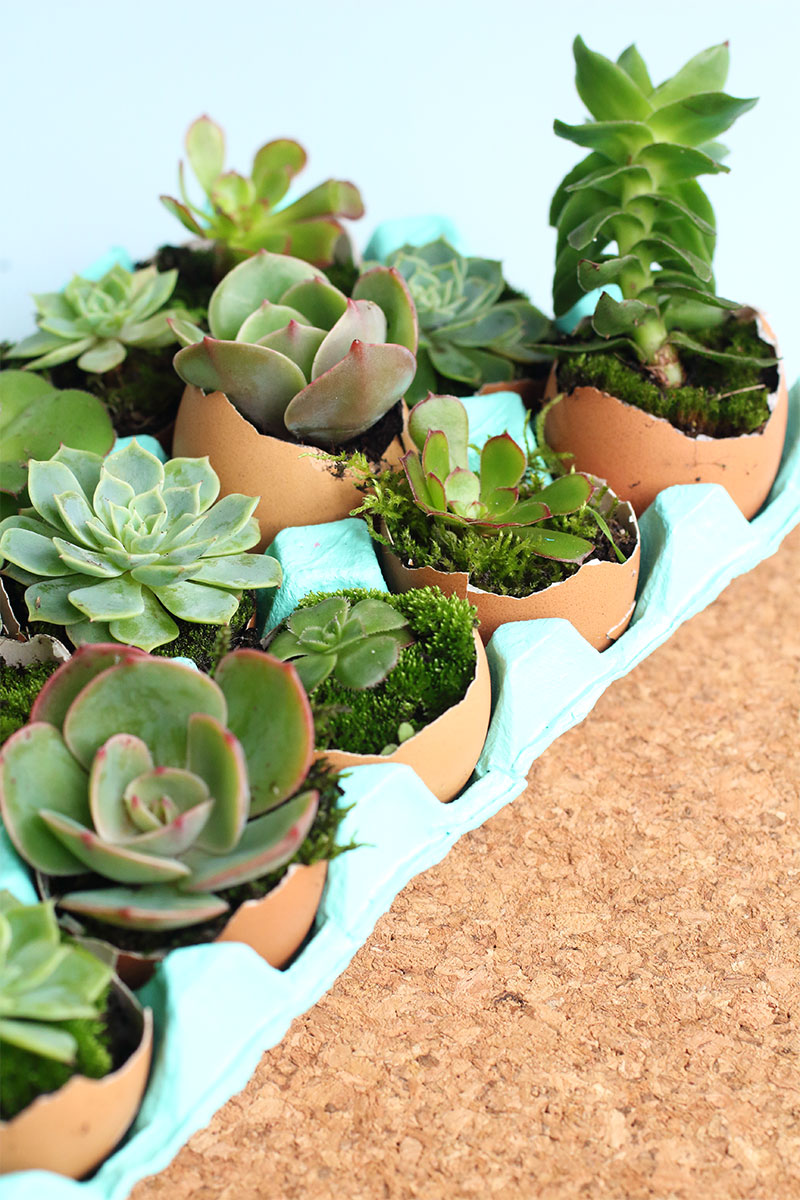 How To Make A DIY Eggshell Succulent Garden   Eclectic Creative