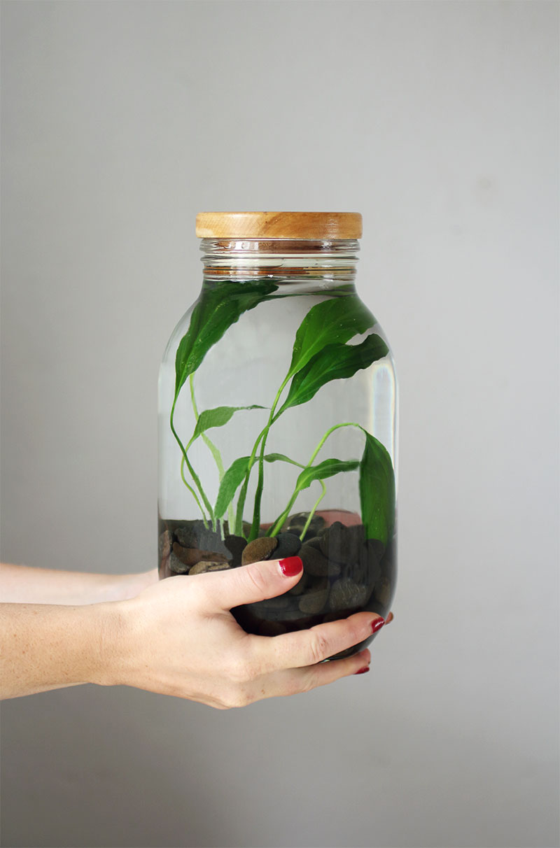 How to make a your own indoor water plant eclectic creative how to make your own indoor water plant eclectic creative workwithnaturefo