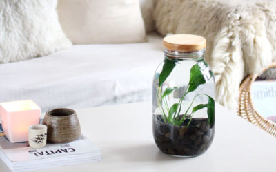 DIY Indoor Water Plant Tutorial